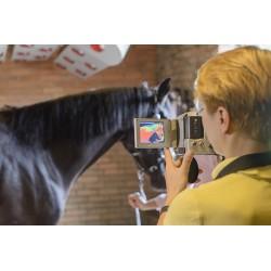 rehabilitacja konia w solarium