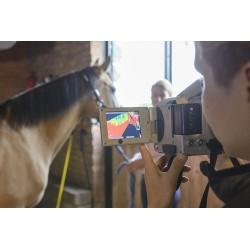 solarium jako sposób rehabilitacji konia