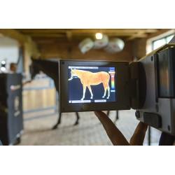 stymulacja krążenia krwi u konia