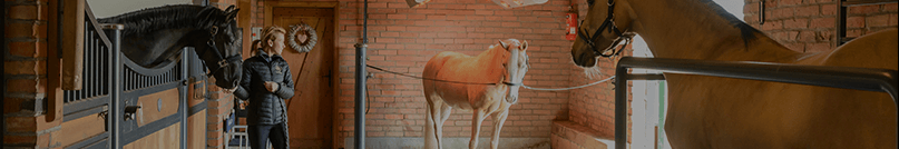 Spa dla koni | BM Horse