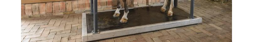 Płyty wibrujące dla koni - platforma wibrująca dla konia| BM Horse