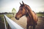 Dlaczego warto poddawać naszego konia zabiegom na solarium?