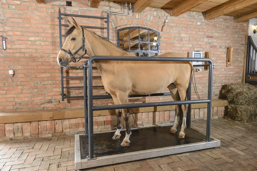 Terapia i regeneracja koni