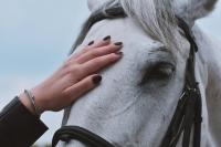 Wychowanie i oswajanie konia